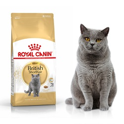 Karma dla kota British Shorthair Royal Canin